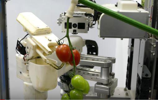 Panasonic Tomato Harvest Robot Robotic Gizmos
