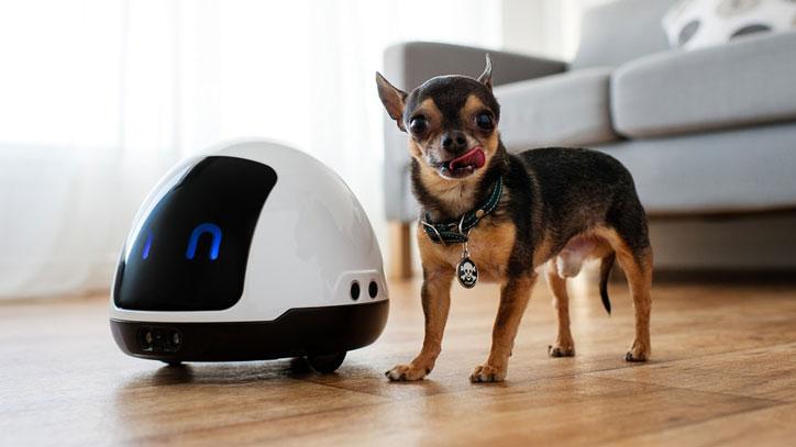 MIA Robot for Dog & Cat Parents - Robotic Gizmos